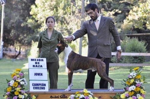 "Champion Jóven Chileno Jupiter I Del Tercer Milenio, ""Messy"". Handlers Javier Núñez Vásquez y Emilia Di Vanni"