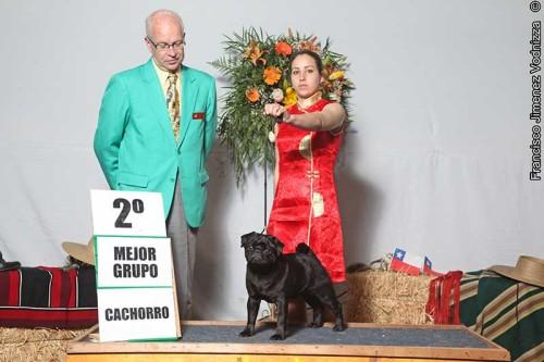 """Jóven Campeón Chileno Honorable Laur Lightmuz, """"Laudrik"""". Juez Edward Wild (Canadá). Handler Emilia Di Vanni"""