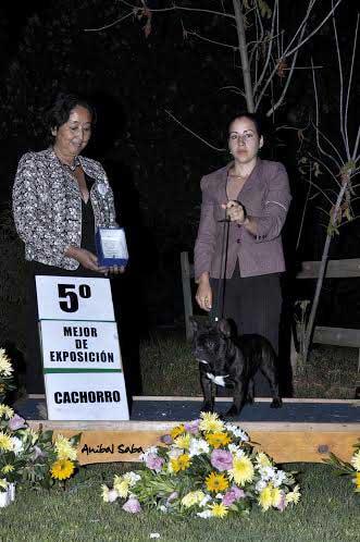 "Champion Jóven Chilena Gohete's Gotica, ""Guga"". Jueza Ikuko Nagasako (Brasil). Handler Emilia Di Vanni."