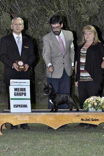 "Champion Jóven Chilena Gohete's Gotica, ""Guga"". Juez Rodrigo Quezada (Chile). Handler Javier Núñez."